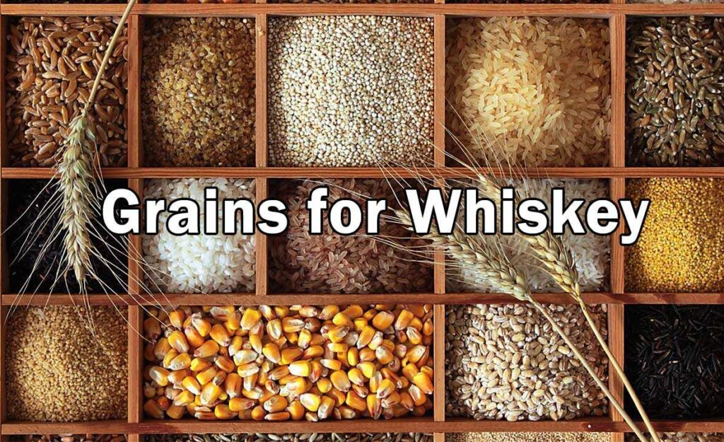 Grains for Whiskey