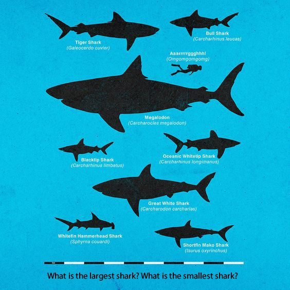 Largest and Smallest Shark