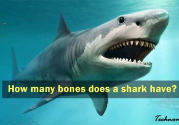 How Many Bones does a Shark have