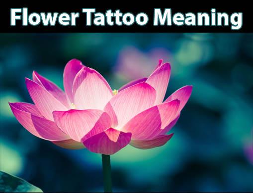 Lotus Flower: